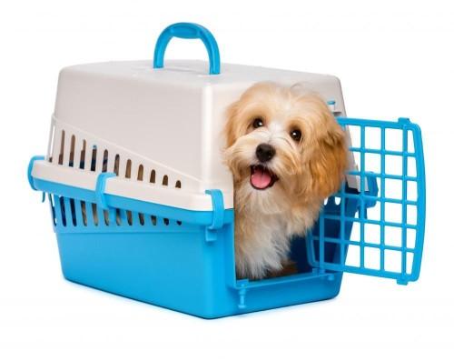 Cute Happy Puppy in a Dog Crate