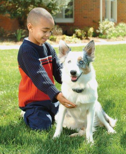 Happy Dog with a Wireless Dog Fence