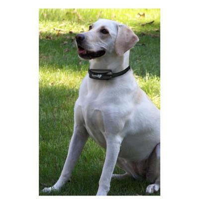 Havahart Wireless Radial-Shape Select Fence Dog