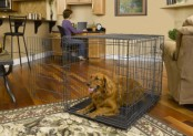 Midwest Select Triple Door Dog Crate Review