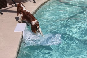 Paws Aboard Pool Pup Dog Ladder Steps