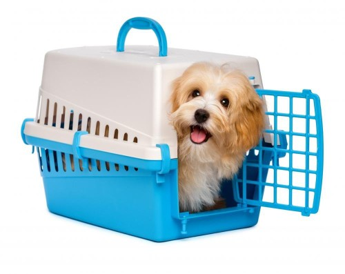 Cute Happy Puppy in a Dog Crate