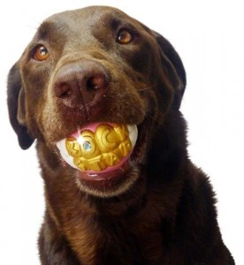 Humunga Bling Rock Star Teeth Shaped Ball Toy for Medium and Large Dogs